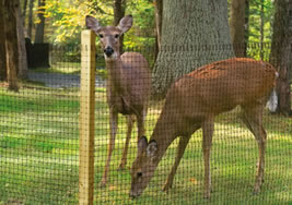 Poly Deer Fence Mesh Roll