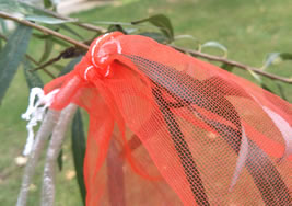 Date Palm Bag With Black Drawstring Rope