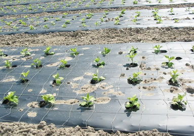 PE Protection Greenhouse Mulching Film